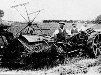 Corn Cutting