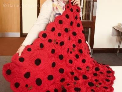 haughton-poppies